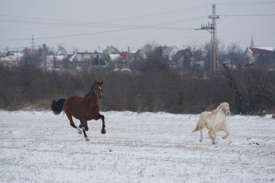 Karcsi és Szikra